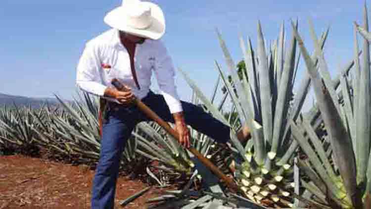 Hacienda San José del Refugio, cuna del Tequila
