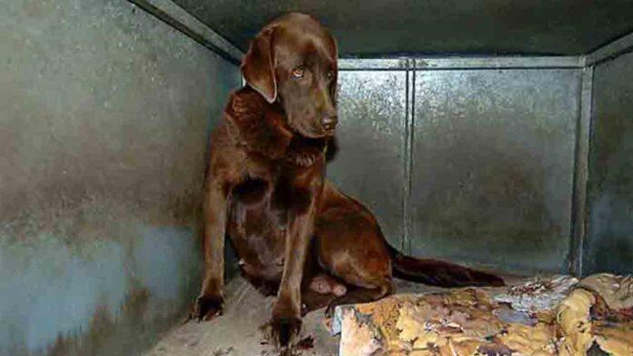 38 cachorros enfermos en una tienda de Barcelona