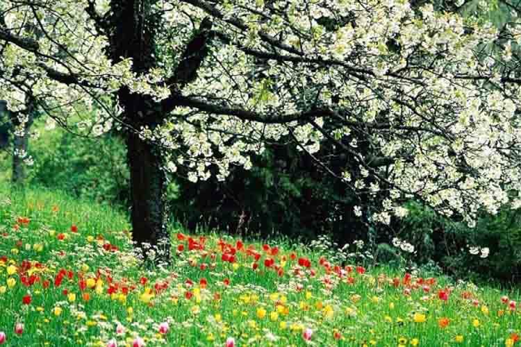 Seis gloriosas formas de celebrar la primavera