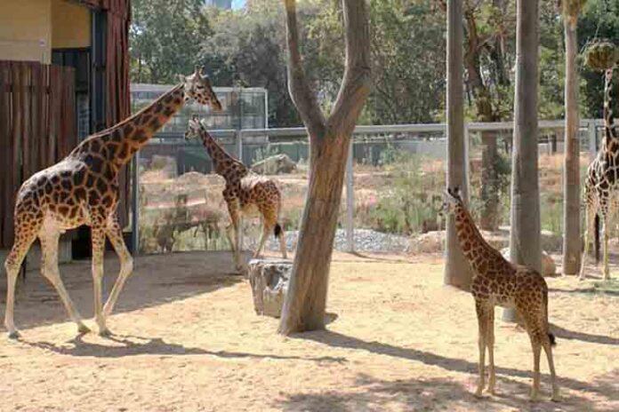 Cambios en el Zoologico de Barcelona