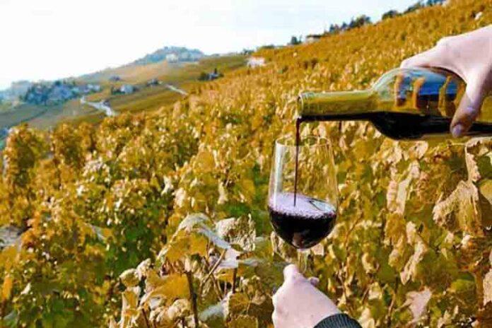 Saborea el arte del buen vino en Catalunya