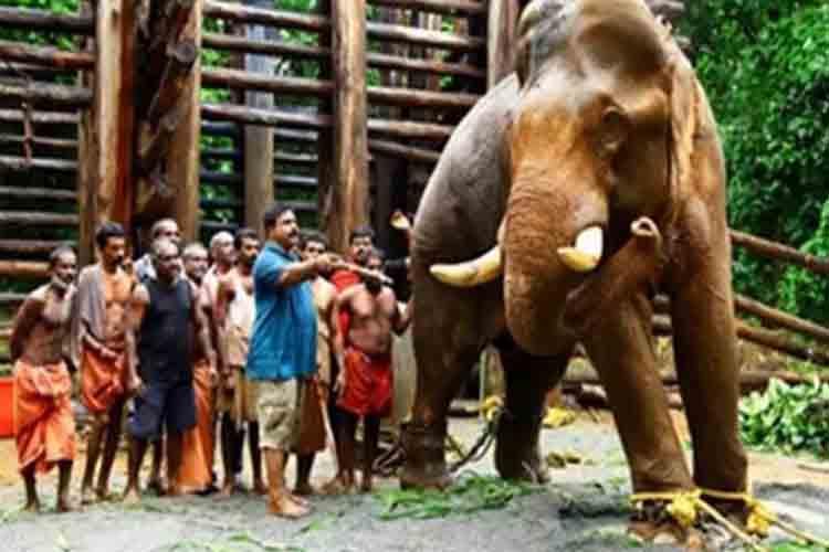 En un rincón de la India, dos mundos se enfrentan por un elefante