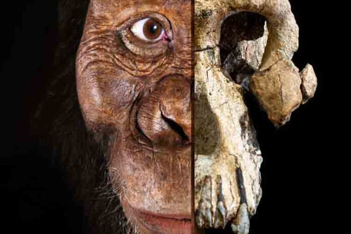 Hallado el cráneo de un Australopithecus Anamensis en Etiopia