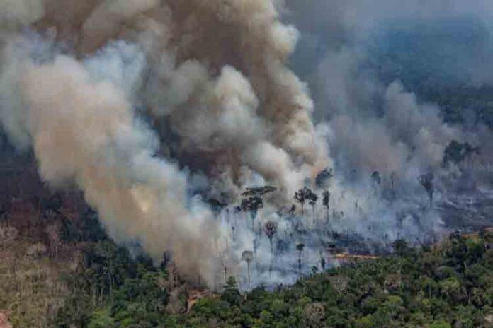 Michael Shellenberger de Forbes engaña con los incendios de Amazonas