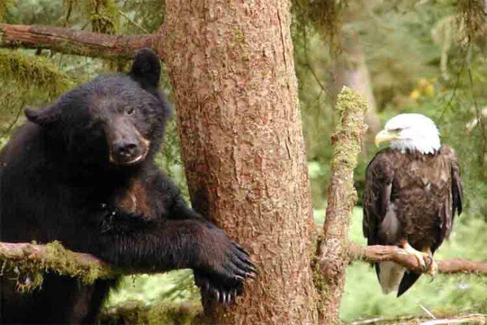 Trump pretende abrir el bosque tropical de Alaska a la explotación corporativa