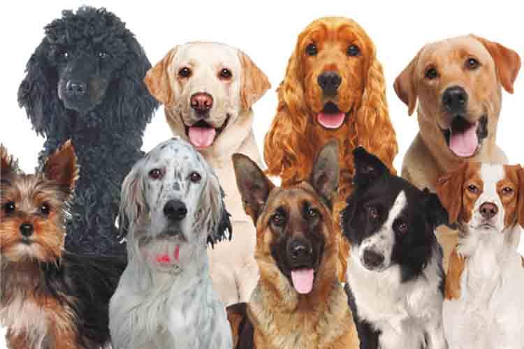 La instromisión humana ha manipulado el cerebro de los perros