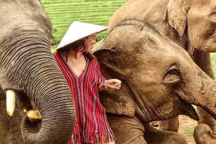 Los viajes sostenibles y la difícil situación de los animales salvajes