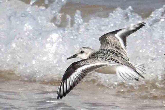 Tres mil millones de aves de América del Norte han desaparecido desde 1970