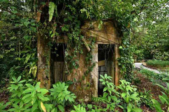 La abundancia del nuevo parque natural de Thomson en Singapur