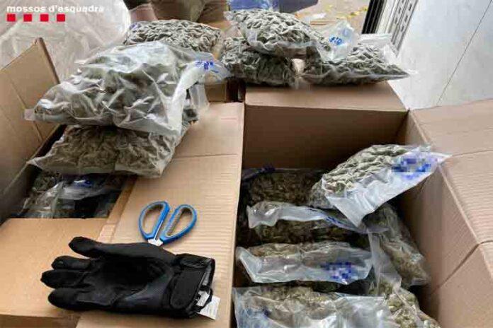 Ingresa en prisión un hombre que transportaba en su camión 82 kilos de marihuana