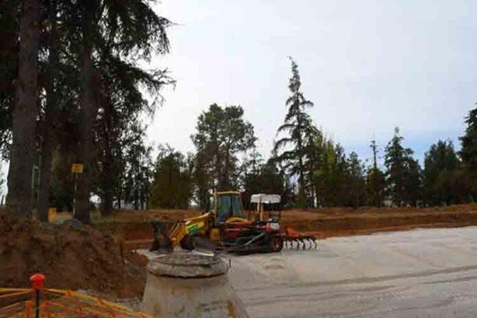 Los responsables del Aeropuerto de Granada talan cedros del Himalaya y cipreses