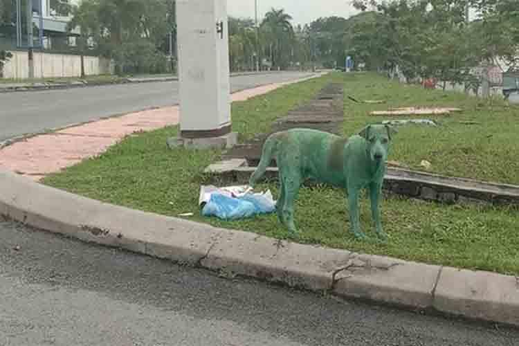 La crueldad de algunos humanos con los animales: Pintan a un perro de verde