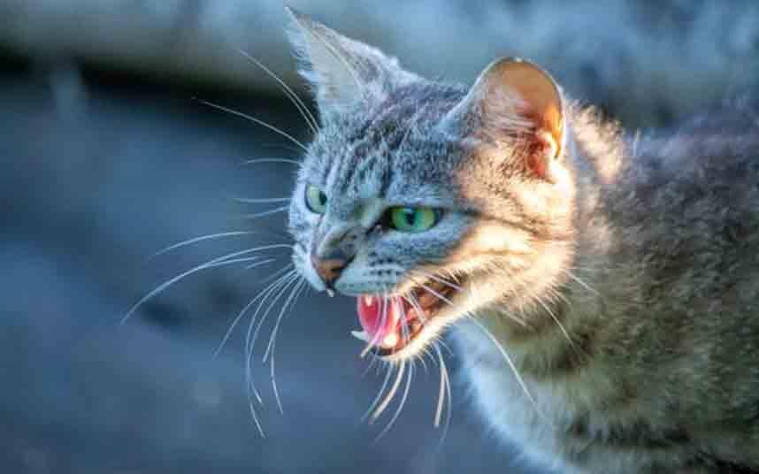 Muere un hombre de rabia por la mordedura de un gato en un viaje a Marruecos