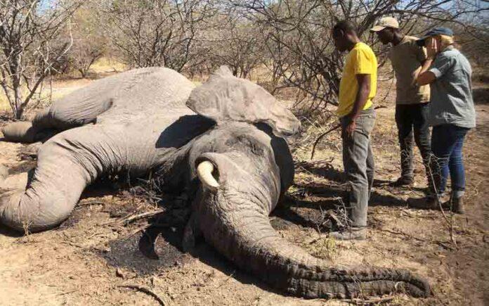 Botswana vende licencias para matar elefantes a 35000 euros por cabeza