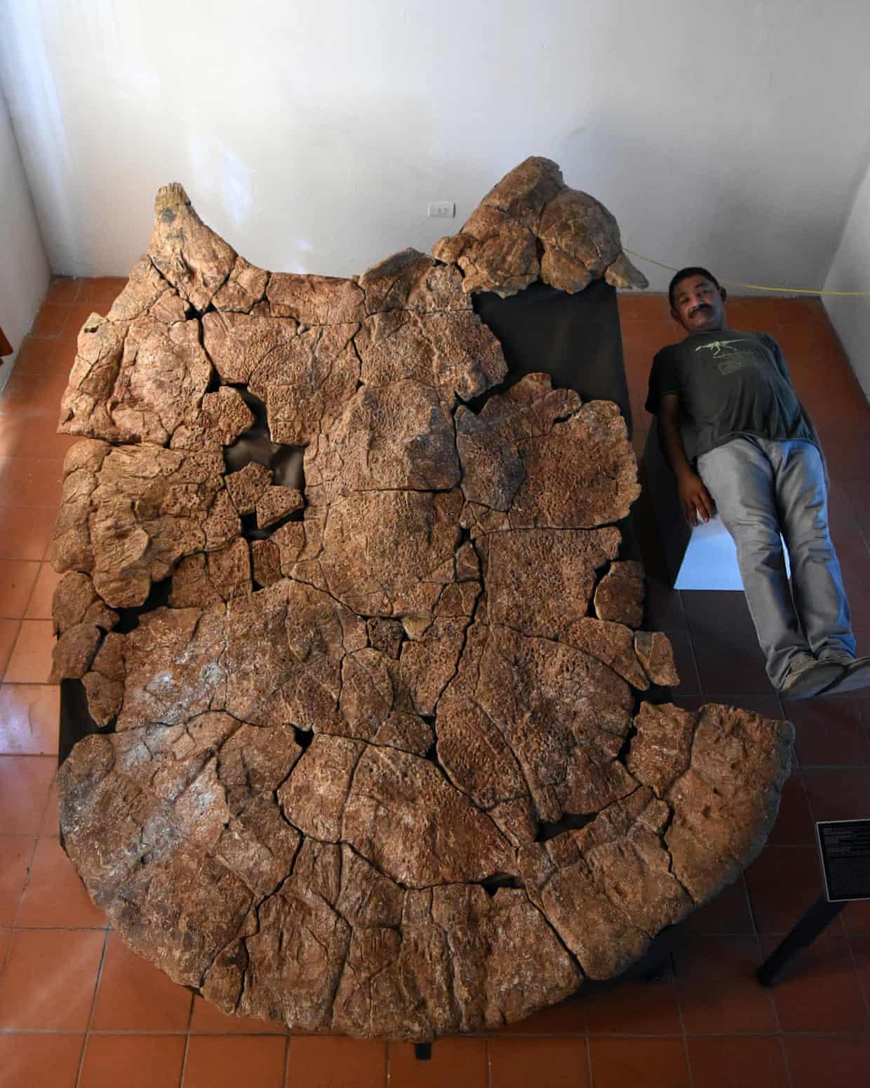 Encuentran fósiles de tortugas gigantes del tamaño de un coche en Sudamérica