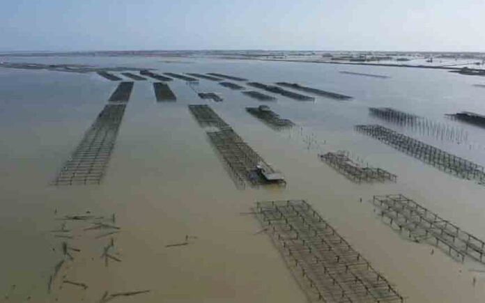 La lucha por salvar el Delta del Ebro después del la debastadora