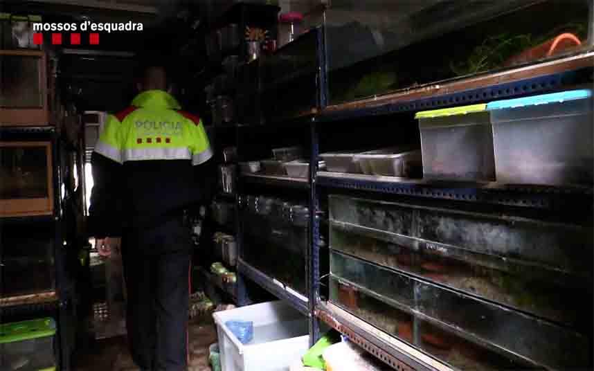 La policía localiza cientos de anfibios en un local de Barcelona