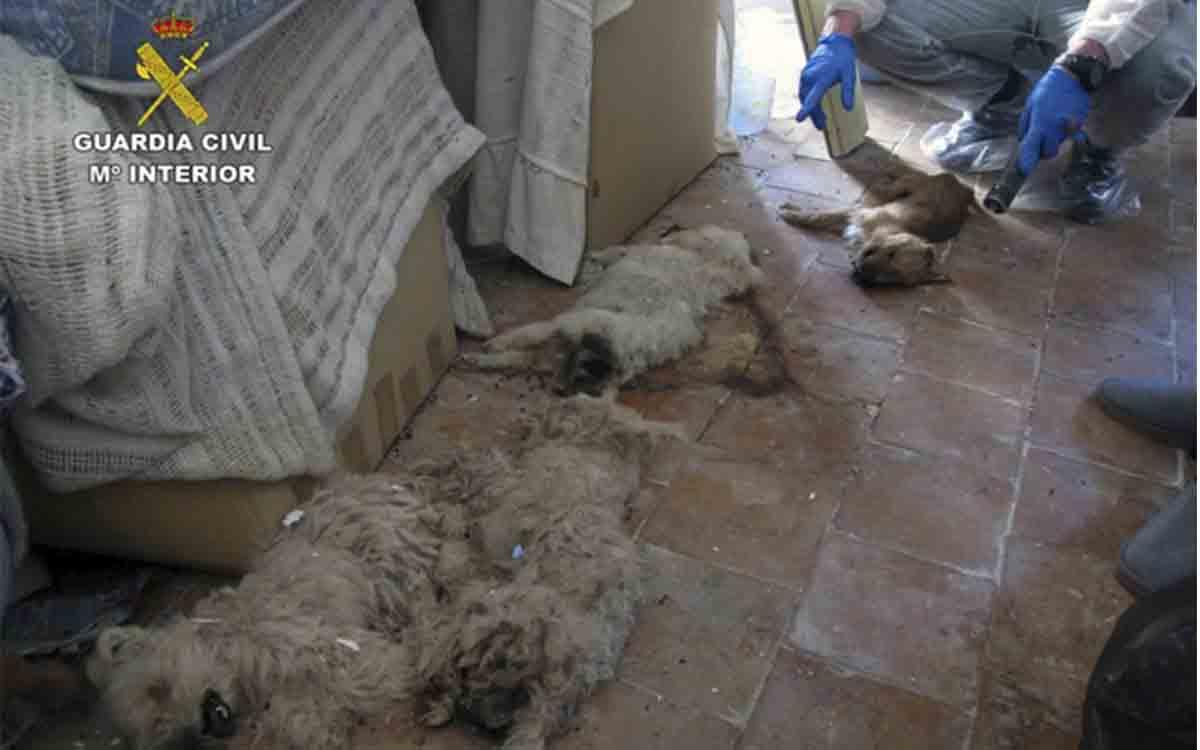 Investigado un hombre por abandono animal y tenencia ilícita de especies protegidas