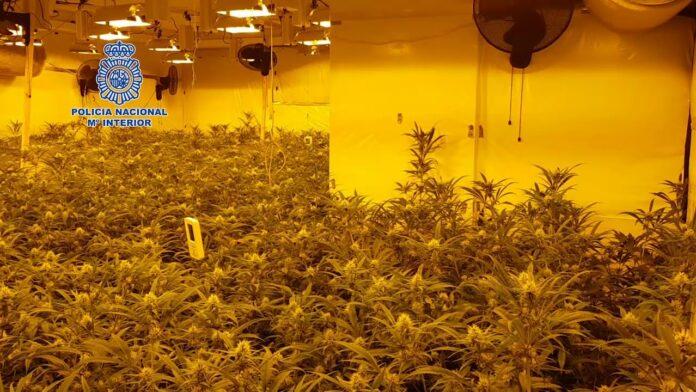 La policía incauta 160 kilos de marihuana y detiene a 17 personas
