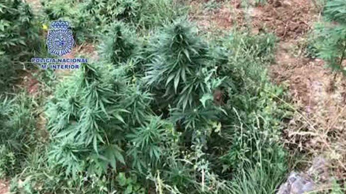 Intervenidas cinco toneladas y media de marihuana en Huesca y Lleida
