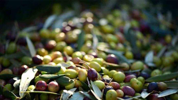 El Gobierno invierte 4 millones para promocionar los alimentos de España en el exterior