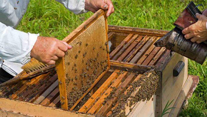 Subvenciones para proyectos de investigación en el sector apícola