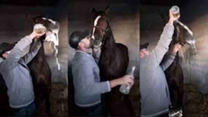 Un personaje hace beber una botella de champán a un caballo después de una carrera