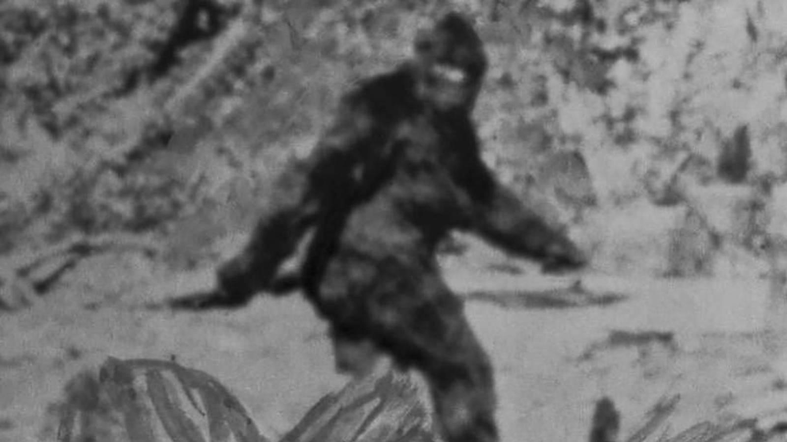 La extraña historia de nuestra búsqueda de Bigfoot