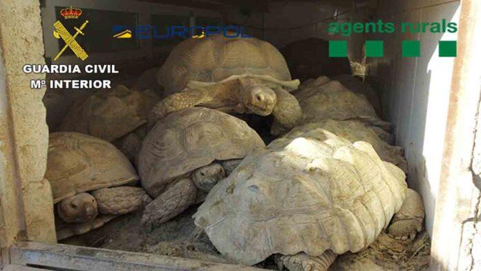 La Guardia Civil desarticula dos grupos que traficaban con especies protegidas