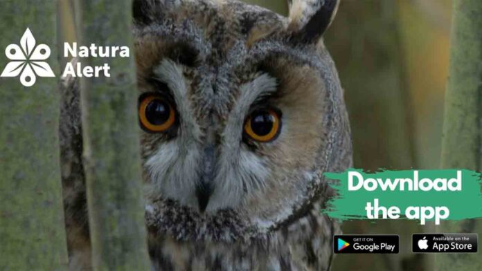 BirdLife: Uso de la ciencia ciudadana para proteger la naturaleza