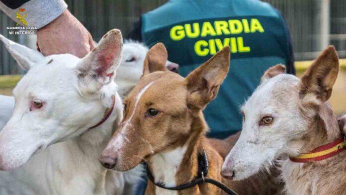 Desarticulada una organización dedicada al robo y venta de perros de caza