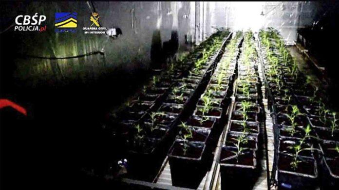 Desarticulan la organización más activa de tráfico de marihuana en Europa