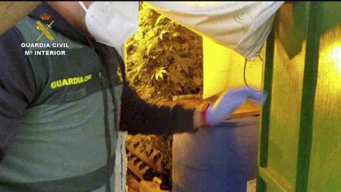 Desmantelada en Sevilla una organización dedicada al tráfico de marihuana