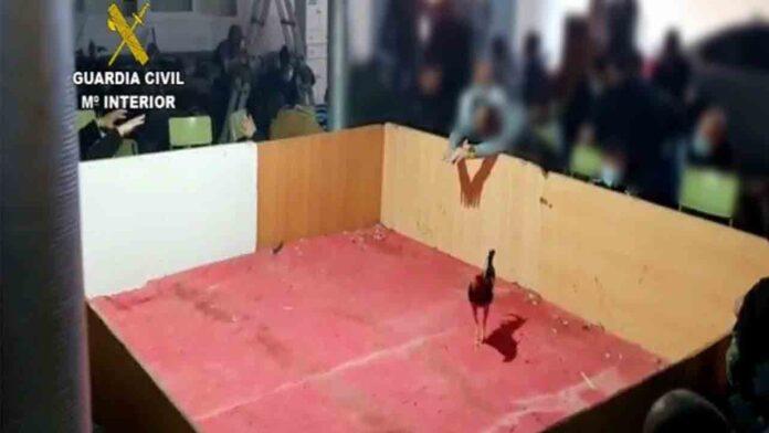 Disuelven una pelea de gallos ilegal donde se concentraban 90 personas