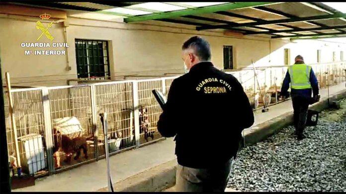 Detenidos un veterinario y un criador de perros por cortar las cuerdas vocales a los animales