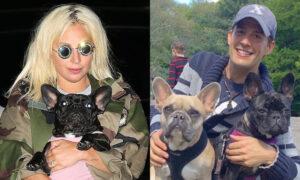 Disparan y roban dos bulldogs franceses al paseador de perros de Lady gaga