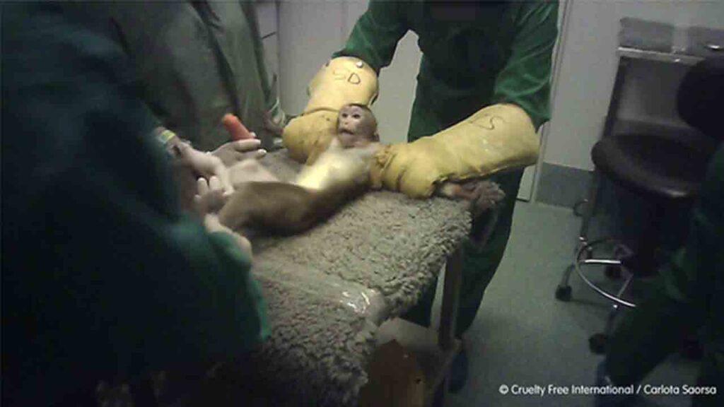 Denuncian el trato cruel a los animales en el laboratorio Vivotecnia de Madrid