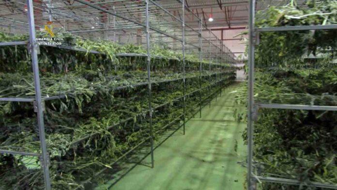 Intervenidas más de cuatro toneladas de marihuana en Teruel