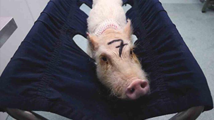 La Comunidad de Madrid oculta información sobre los animales maltratados en Vivotecnia
