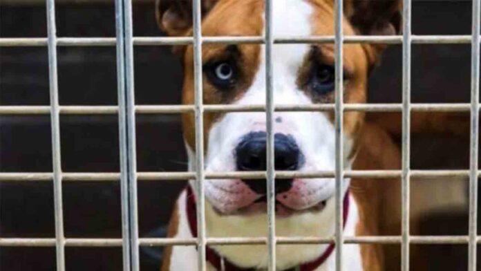 Consejos para la adopción de perros