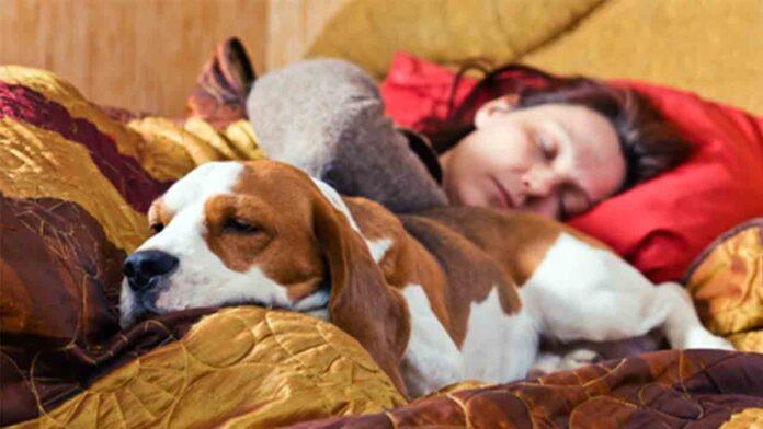 Dormir con tu perro podría ayudarte a descansar mejor por la noche