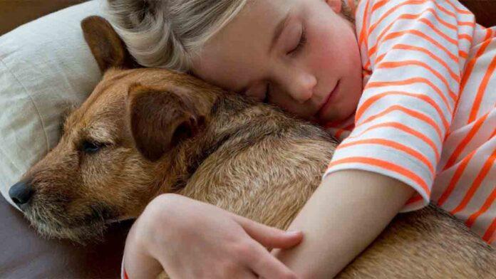 Principales motivos para adoptar un perro
