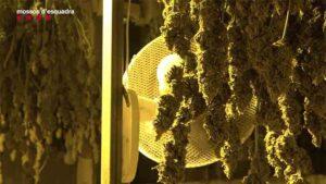 Una organización introducía ilegalmente ciudadanos chinos y les obligaba a cultivar marihuana
