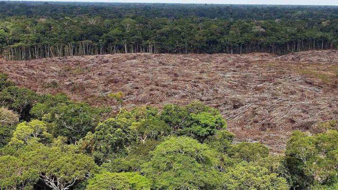 La deforestación en la Amazonía brasileña alcanza el nivel anual más alto en una década