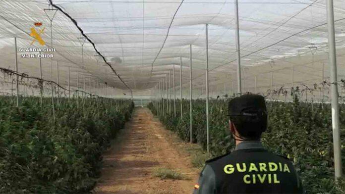 Incautadas 40.000 plantas y 130 kilos de marihuana en Granada