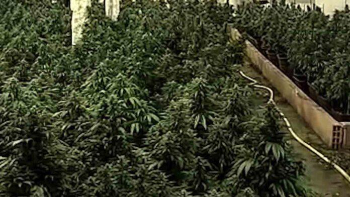 Un clan de Sabadell blanqueó más de 3 millones de euros con la marihuana
