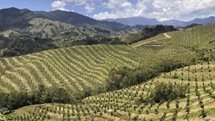 El auge del aguacate en Colombia muestra los costes ocultos del 'oro verde'