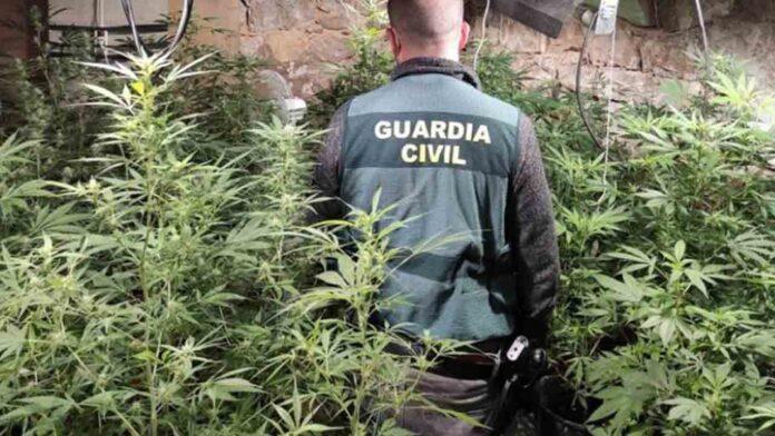 Incautan 400 kilos de cogollos de marihuana en Cuenca
